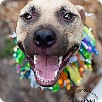 Adopt A Pet :: Tyson - Orlando, FL