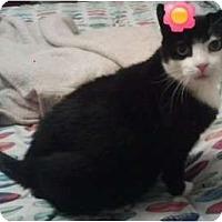 Adopt A Pet :: Tara - Catasauqua, PA