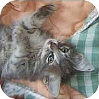 Adopt A Pet :: Z & Baby - Dallas, TX