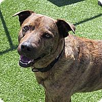 Adopt A Pet :: Ranger - Meridian, ID