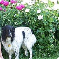 Adopt A Pet :: Riley - Washington, IL