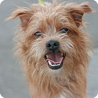Adopt A Pet :: Milo - Canoga Park, CA