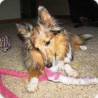 Adopt A Pet :: Roxi - Circle Pines, MN