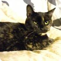 Adopt A Pet :: Sunnie - Bridgeton, MO