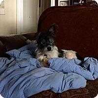 Adopt A Pet :: Abigail - Emory, TX