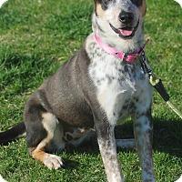 Adopt A Pet :: Duchess - Delano, MN