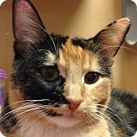 Adopt A Pet :: Sylvia - Winchester, CA
