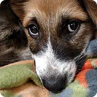 Adopt A Pet :: Kassie - Charlemont, MA