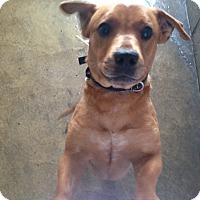 Adopt A Pet :: Tinsel - Pompton Lakes, NJ