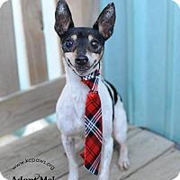 Adopt A Pet :: Hank - Liberty, MO
