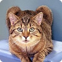 Adopt A Pet :: Bobbie - Paris, ME