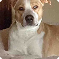 Adopt A Pet :: Dahlia By Appointment - Shorewood, IL