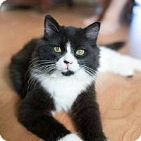 Adopt A Pet :: TONKA - Boca Raton, FL