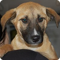 Adopt A Pet :: Rudolph - Brooklyn, NY