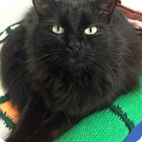 Adopt A Pet :: Sparks - Hendersonville, NC