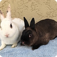 Adopt A Pet :: Pickle & Olive - Bonita, CA
