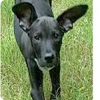 Adopt A Pet :: Leonard - Springdale, AR