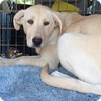 Adopt A Pet :: Tasha - Irmo, SC