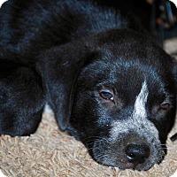 Adopt A Pet :: Rio-ADOPTION PENDING - East Windsor, CT