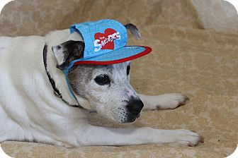 Terrier (Unknown Type, Small) Mix Dog for adoption in Smithfield, North Carolina - Baby (SPECIAL)