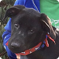 Adopt A Pet :: Timber - Evansville, IN