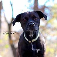 Adopt A Pet :: Queen - Edwardsville, IL