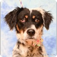 Adopt A Pet :: Jasmine - Pittsboro, NC