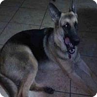 Adopt A Pet :: KAMUELA - San Antonio, TX