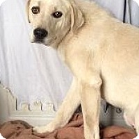 Adopt A Pet :: Casper - Monte Vista, CO