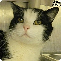 Adopt A Pet :: Chuckles - West Kennebunk, ME