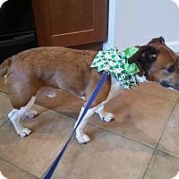 Adopt A Pet :: CHESTER - Bridgewater, NJ