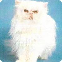 Adopt A Pet :: Gidget - Gilbert, AZ