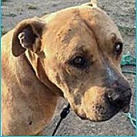 Adopt A Pet :: Delgado - Vista, CA
