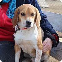 Adopt A Pet :: Loves - Elyria, OH