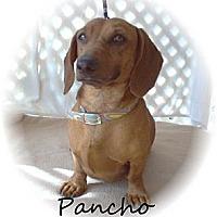 Adopt A Pet :: Pancho - Tucson, AZ