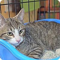 Adopt A Pet :: Chief - Houston, TX