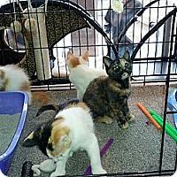 Adopt A Pet :: Lucy (aka Mitzy) - Toronto, ON
