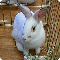 Adopt A Pet :: Melanie - North Gower, ON