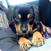 Adopt A Pet :: Kristoff - Miami, FL
