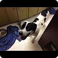 Adopt A Pet :: Rufus - Alamosa, CO