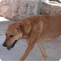 Adopt A Pet :: REX - Gilbert, AZ