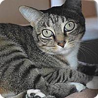 Adopt A Pet :: Bobbi - La Jolla, CA