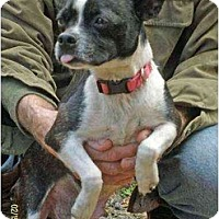 Adopt A Pet :: Sassy - Lincolndale, NY