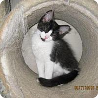 Adopt A Pet :: Kyle - La Jolla, CA