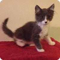 Adopt A Pet :: James - Santa Rosa, CA