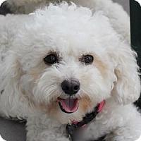 Adopt A Pet :: Candi - La Costa, CA