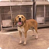 Adopt A Pet :: RAMBO - Upper Sandusky, OH