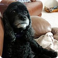 Adopt A Pet :: Sadie W - Parker, CO