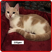 Adopt A Pet :: Gilligan - Miami, FL