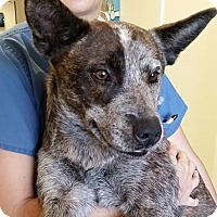 Adopt A Pet :: Audi - Gainesville, FL